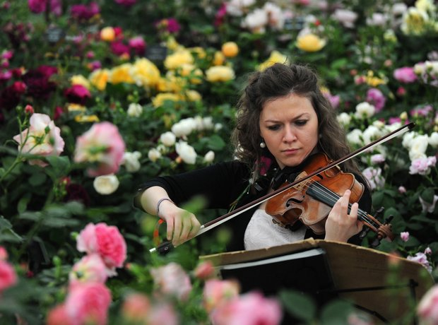 Violinist at Chelsea Flower Show