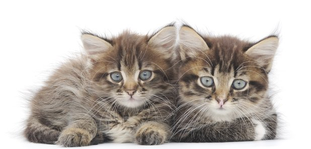 two cats kittens