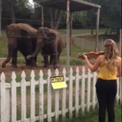 Elephants dancing violin Bach