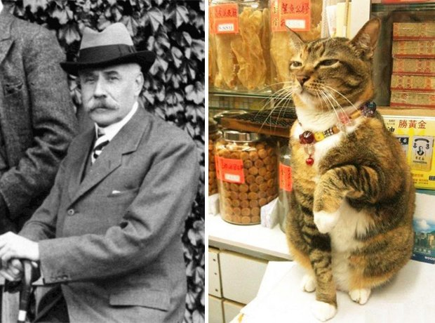 Cat composer lookalike Elgar