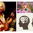 Vivaldi brain