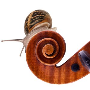 Snail and violin