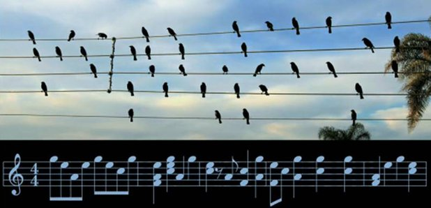 The birds on the wires