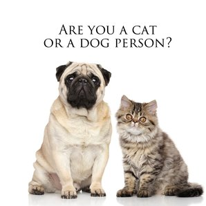 Cat or dog person quiz