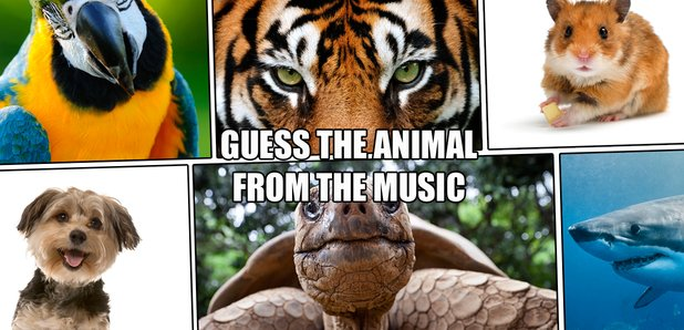 animal music quiz